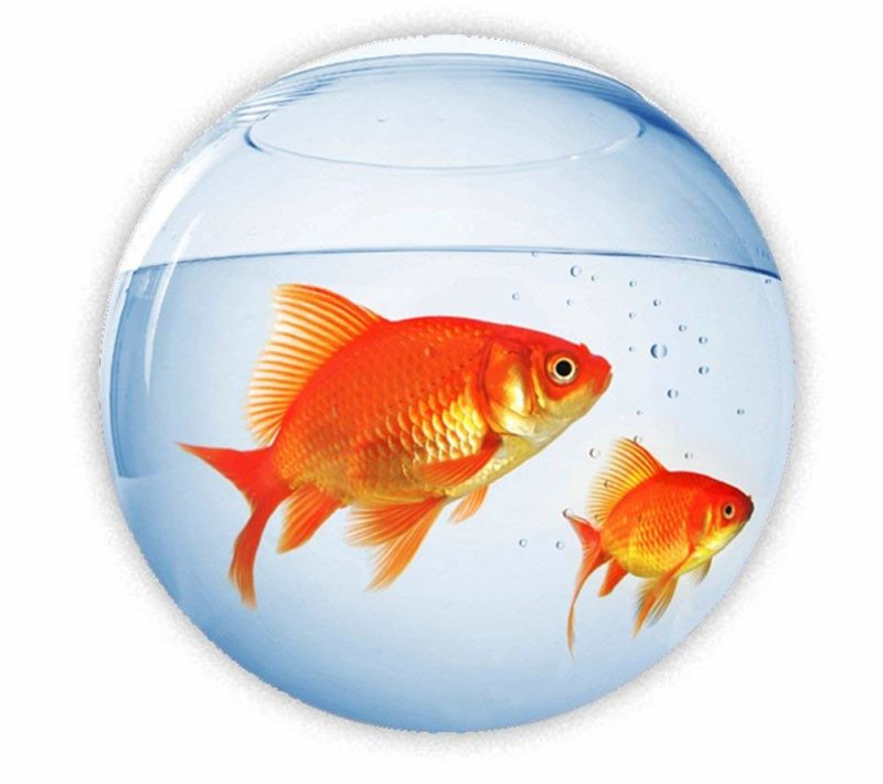 Рыба не мясо, но очень полезна